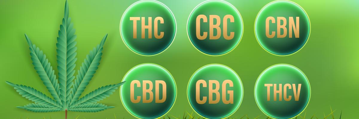 Una panoramica sui cannabinoidi - CBD, THC, CBC, CBN, CBG, THCV